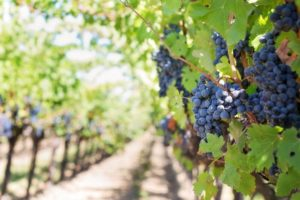 what insurance a texas winery needs, see more about them here